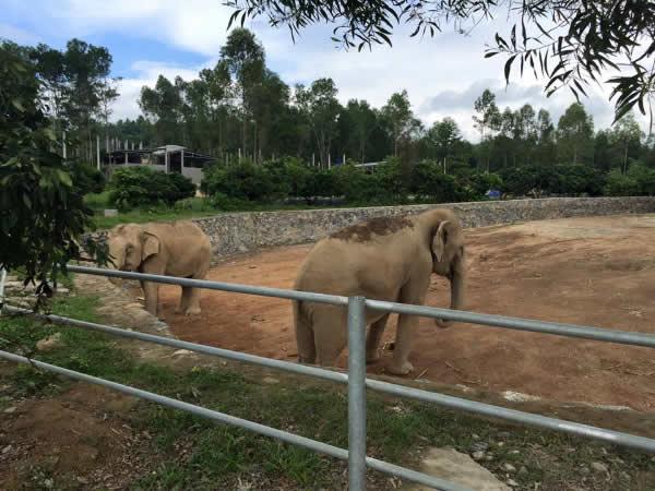 Những chú voi châu phi tại khu du lịch trại bò
