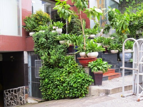 some green potted trees | Manufacturers Outdoor Furniture