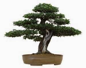 pohon bonsai, Ruang depan rumah minimalis yang mempunyai tempat yang cukup luas di buat taman dengan dominasi tanaman hijau.
