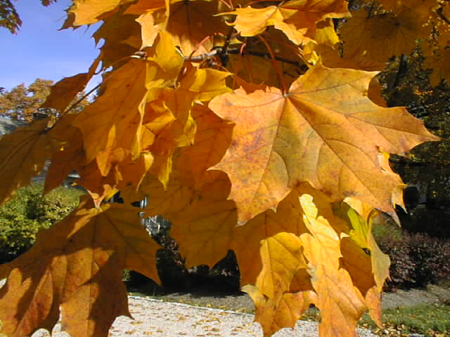 Tidings  Add a Little Romance and Adventure to Your Leaf peeping