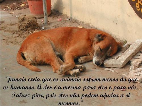 PROJETO CASTRAÇÃO DE ANIMAIS DOMÉSTICOS.