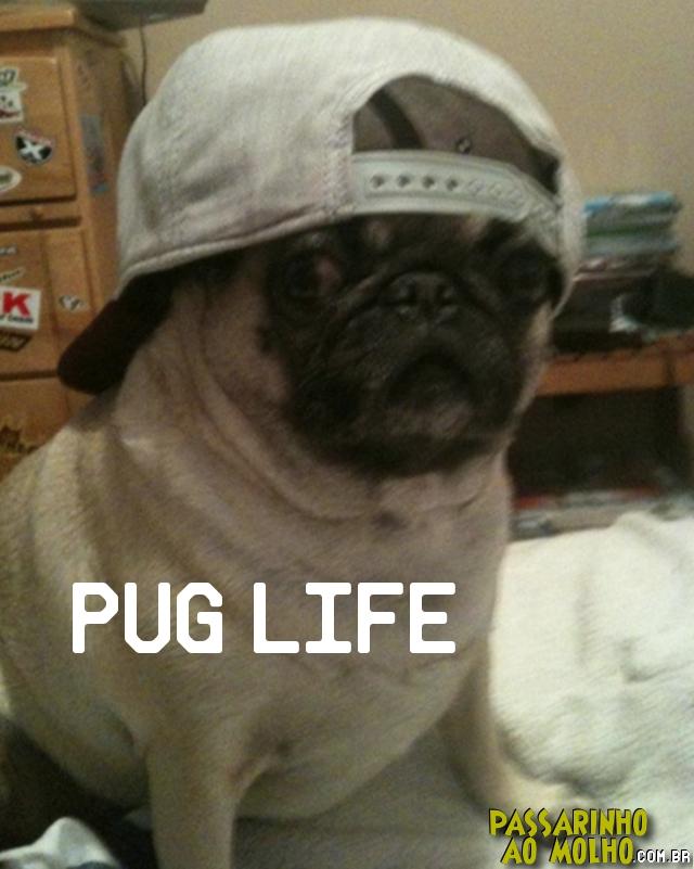 pug, thug life