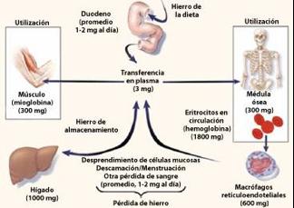 Tasa de pérdida de peso con phentermine - 2017-05