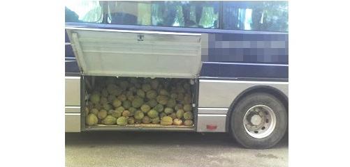 bawa durian dalam bas