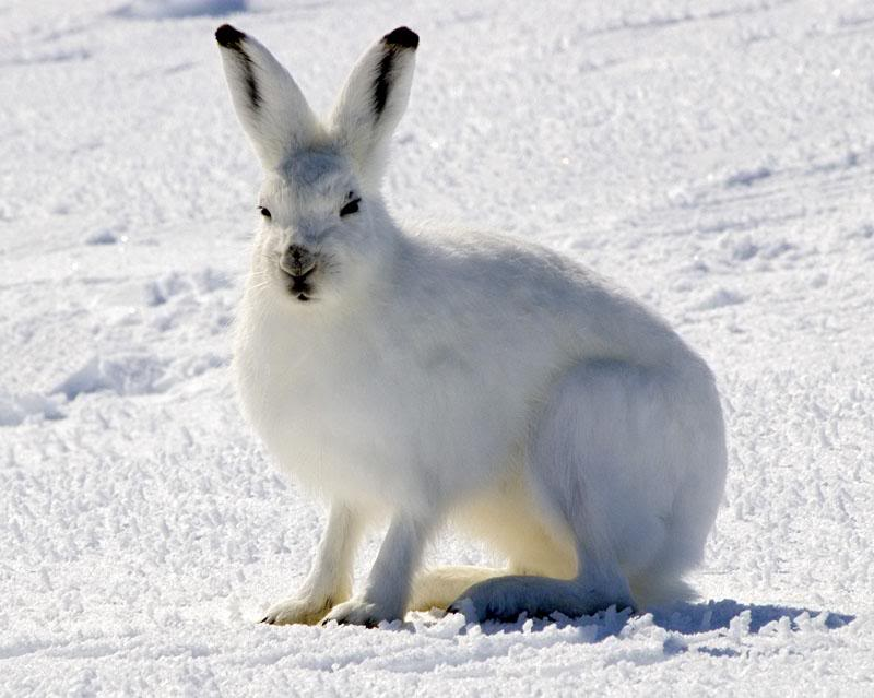 Jual Sambal Ikan Roa Melalui Online - Blogger Template by IdBlogDesign ...: tundra-animals-plants.blogspot.com/2011/05/tundra-animals-arctic...