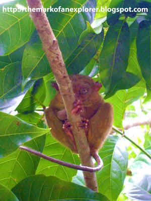 bohol tarsier sanctuary