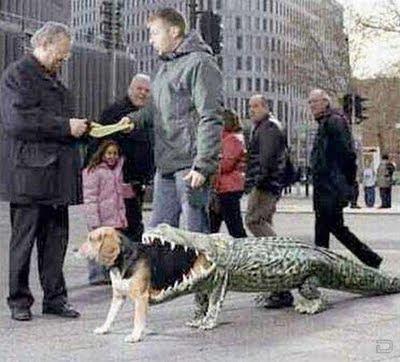 disfraz+de+perro Fotos de Animales chistosas.