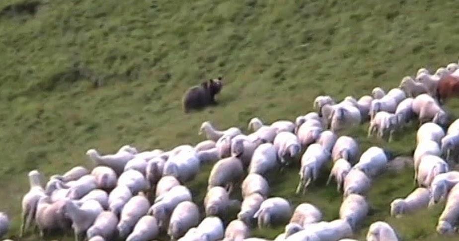 Terre alte il pastore e l 39 orso for Cabina di montagna grande orso