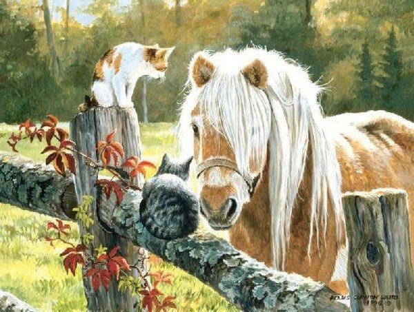кошка и лошадь