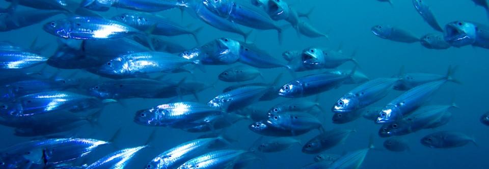 Asesor a trucha y tilapia invierta for Cria de peces en casa