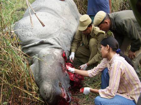 Rinoceronte - Imgenes gratis en Pixabay