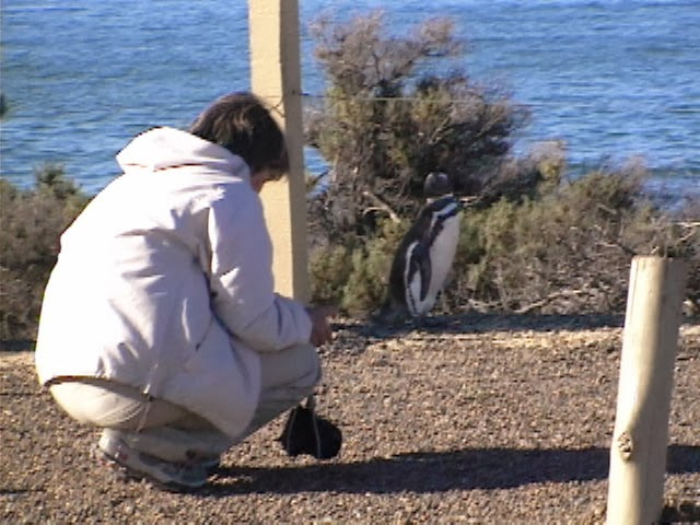 Fotografando Pinguins em Punta Tombo - Argentina