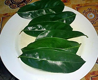 manfaat daun buah sirsak untuk kesehatan