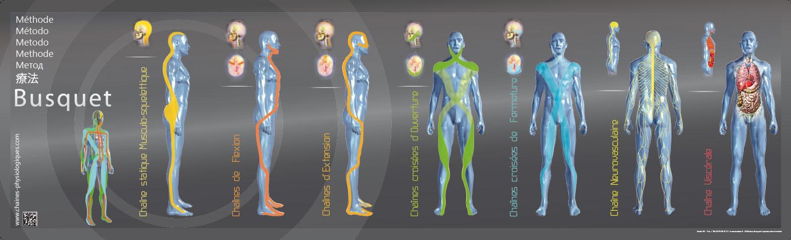 Cadenas musculares | Guiomarix