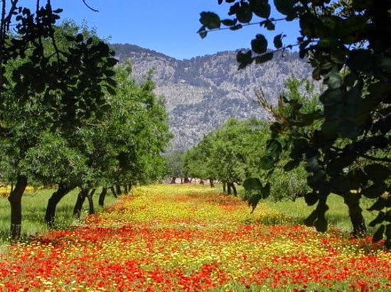 Blog jes s paisajes del clima mediterr neo for Clima mediterraneo de interior