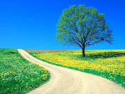 Flores e paisagens (flowers spring road )