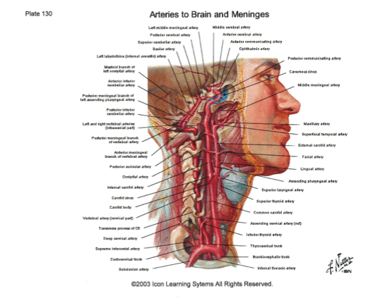 short essay questions in anatomy