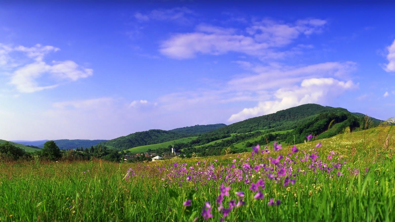 Wallpaper met heuvels met paarse bloemen