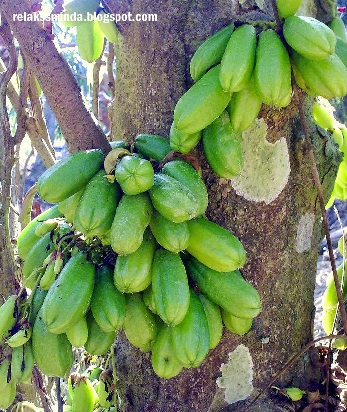 buah belimbing buluh