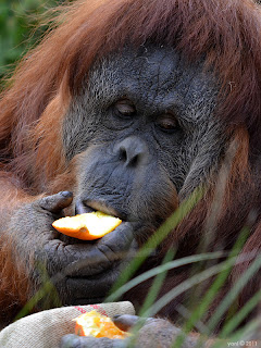 orang with an orange