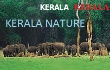 TRAVEL TO KERALA NATURE