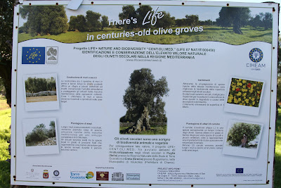 Olive Grove Sign - Centuries-old olive trees