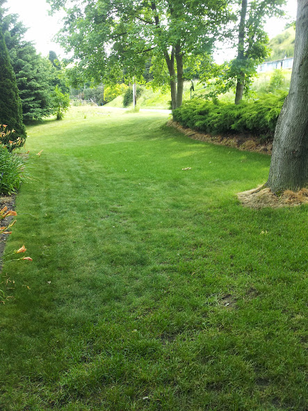 weed control, dandelions, clover, thistles, weeds, lawn, walla walla, dayton, milton freewater