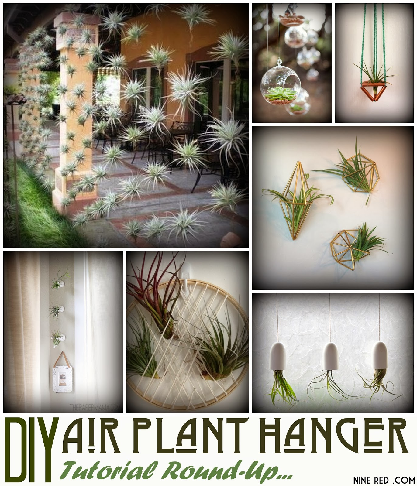 nine red  diy air plant hanger collection