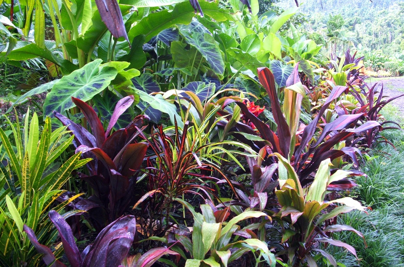 El arish tropical exotics lush tropical plants for for Landscape plants for full sun