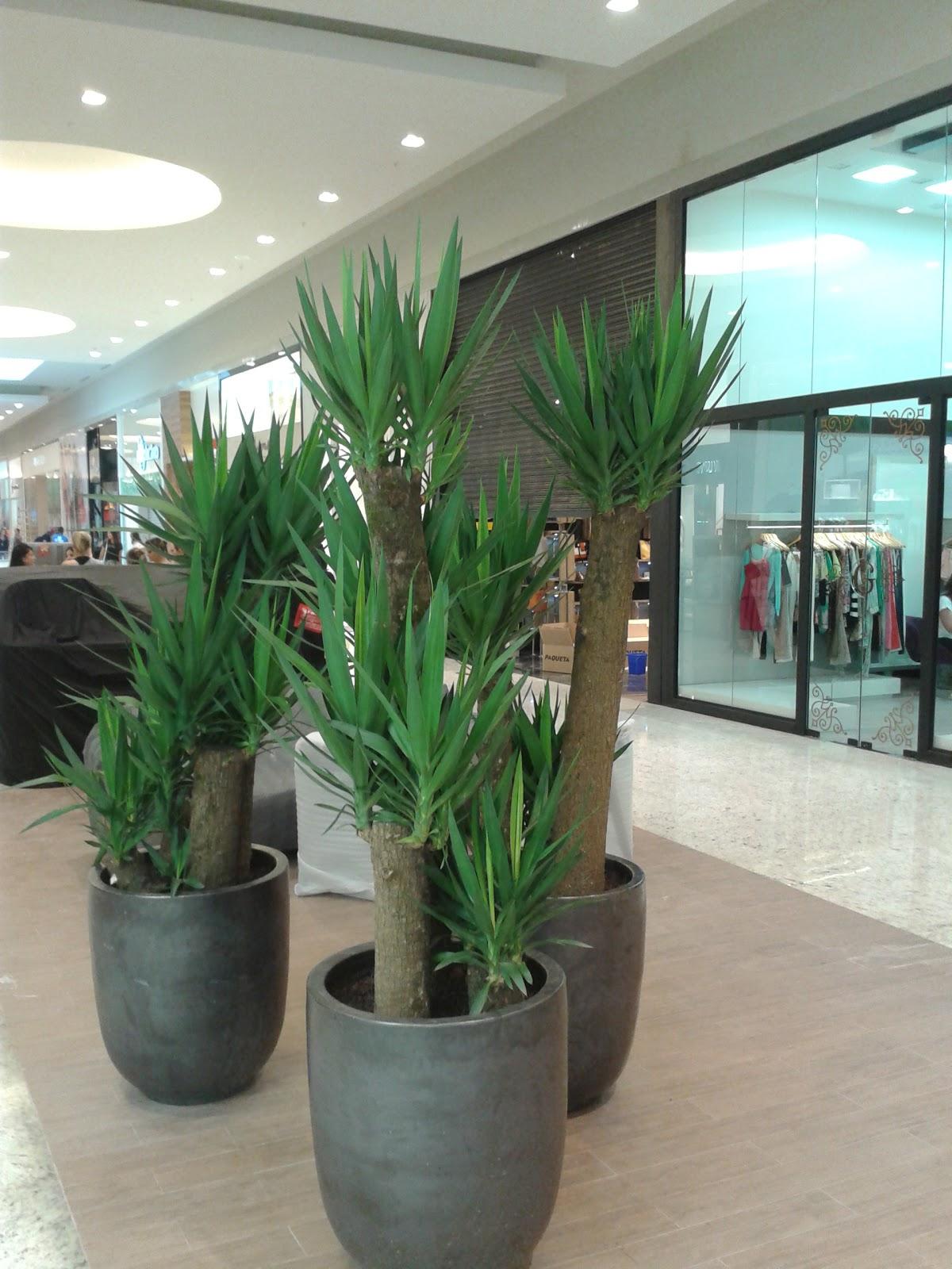 Plantas para interior boa vista plantas ornamentais for Yuca de interior