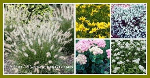 A Guide To Northeastern Gardening Drought Tolerant Landscape Plants