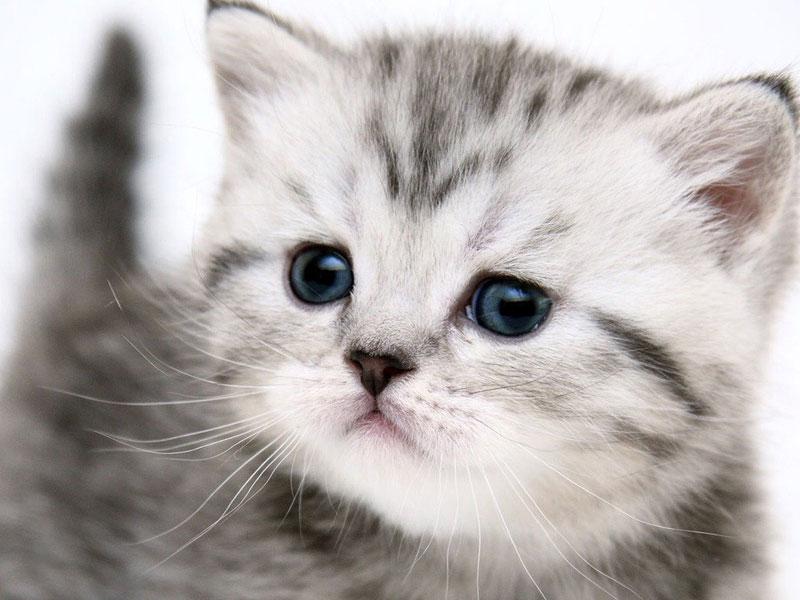 Wallpapers download cat desktop wallpapers - Caterpillar wallpaper ...