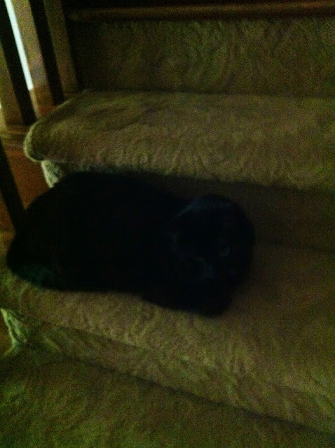 a black cat on the stairs