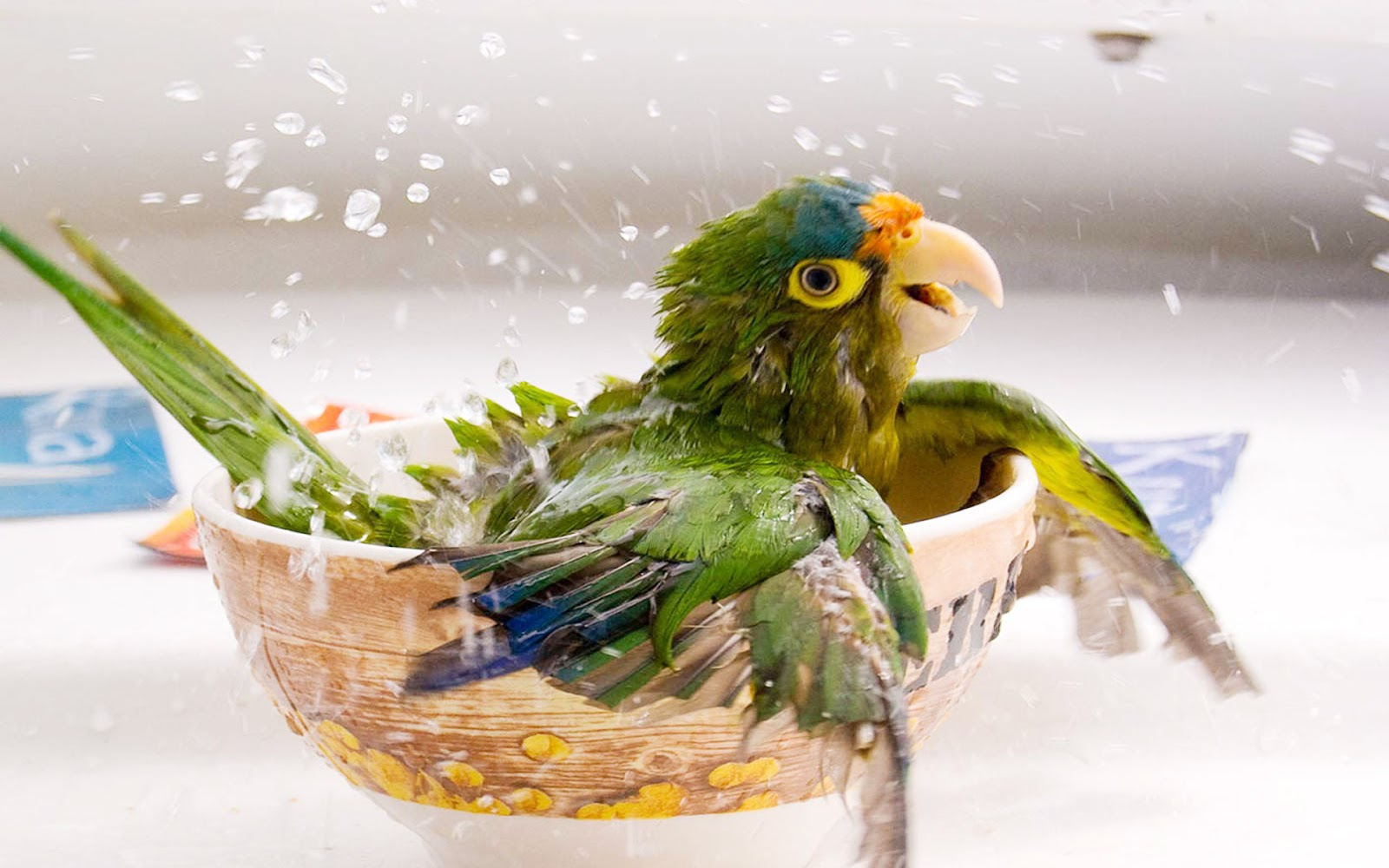 [Image: Cute+Animal+wallpaper+2012+01.jpg]