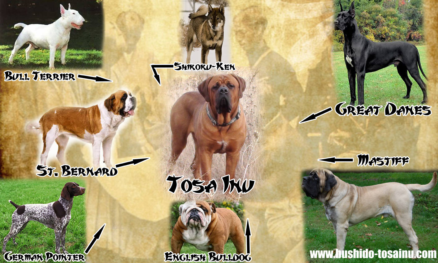 List Of Best Dog Fighting Breeds