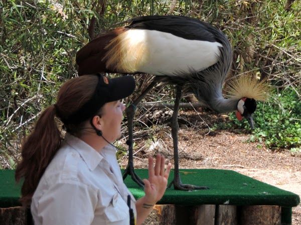 The Frequent Flyers Bird Show caught Reef's attention.