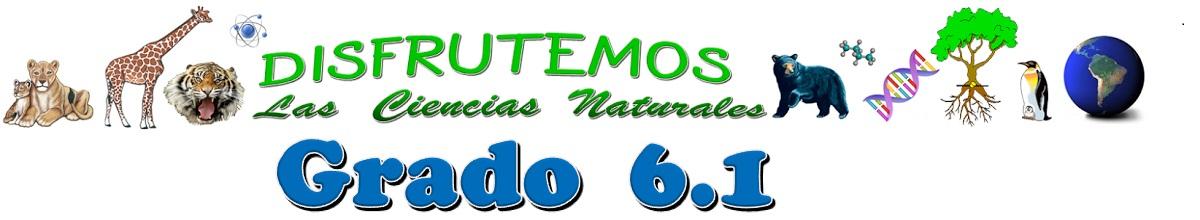 GRADO 6.1 MAURIS SARRIA