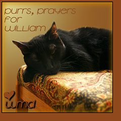 Purrs for William