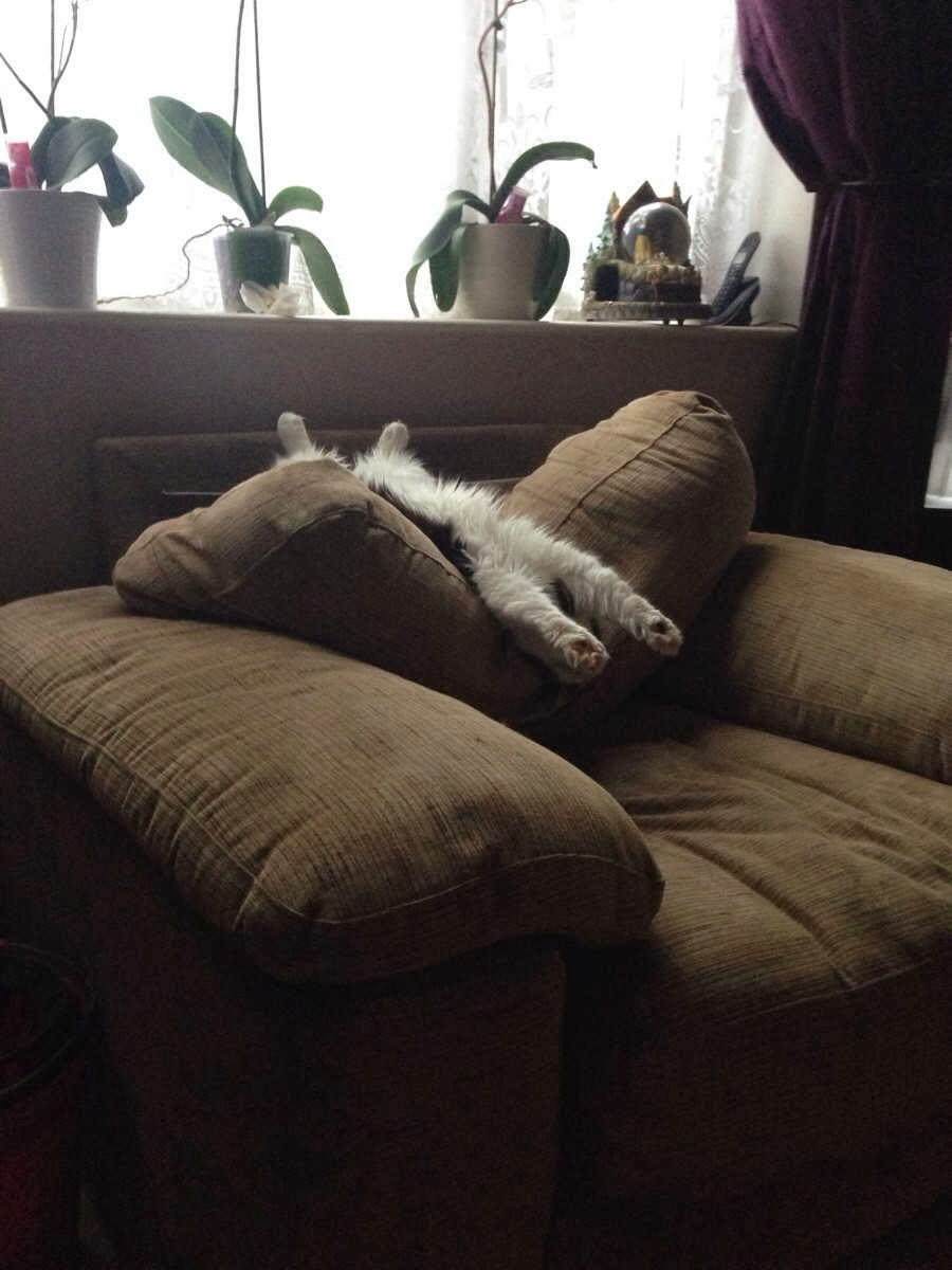 Funny cats - part 86 (40 pics + 10 gifs), kitten sleeping in couch in funny position