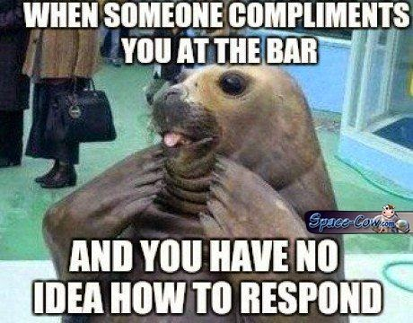 funny seal picture humor
