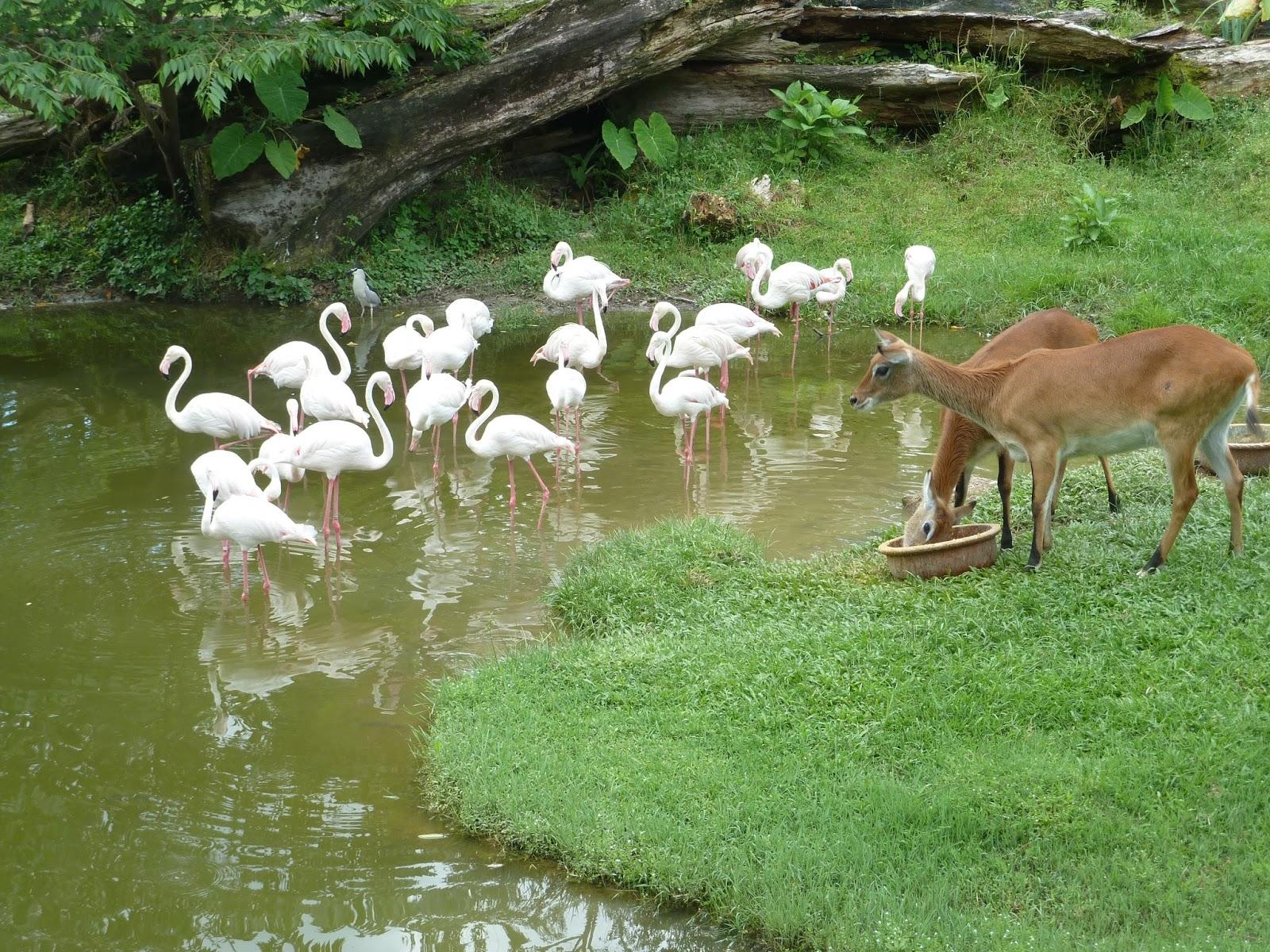 Kembara Minda 7 Mini Zoo Di Rumah