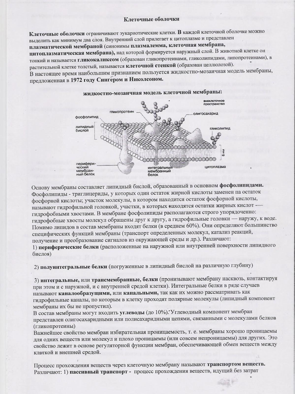 презентация общие признаки земноводных