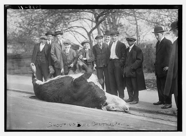Nueva York en el 1900 (excelentes fotos)