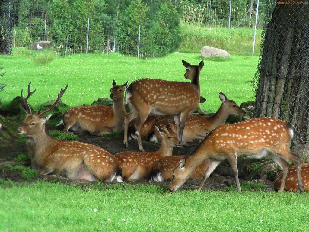 http://4.bp.blogspot.com/-uj_xHM9KDl8/ULsxqJSLUnI/AAAAAAAAALo/G55h4mNinVQ/s1600/deer-14.jpg