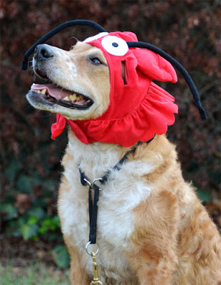 Brisbane's lobster hat