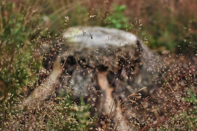 Muonamiehen mökki - Metsälauha ja kanto