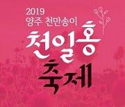 เทศกาลดอกบานไม่รู้โรยและหญ้าชมพู ที่ยางจูนาริ