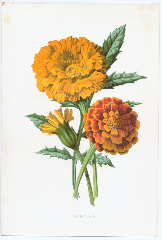 Marigolds I 39m working on some wedding invitations for a May wedding