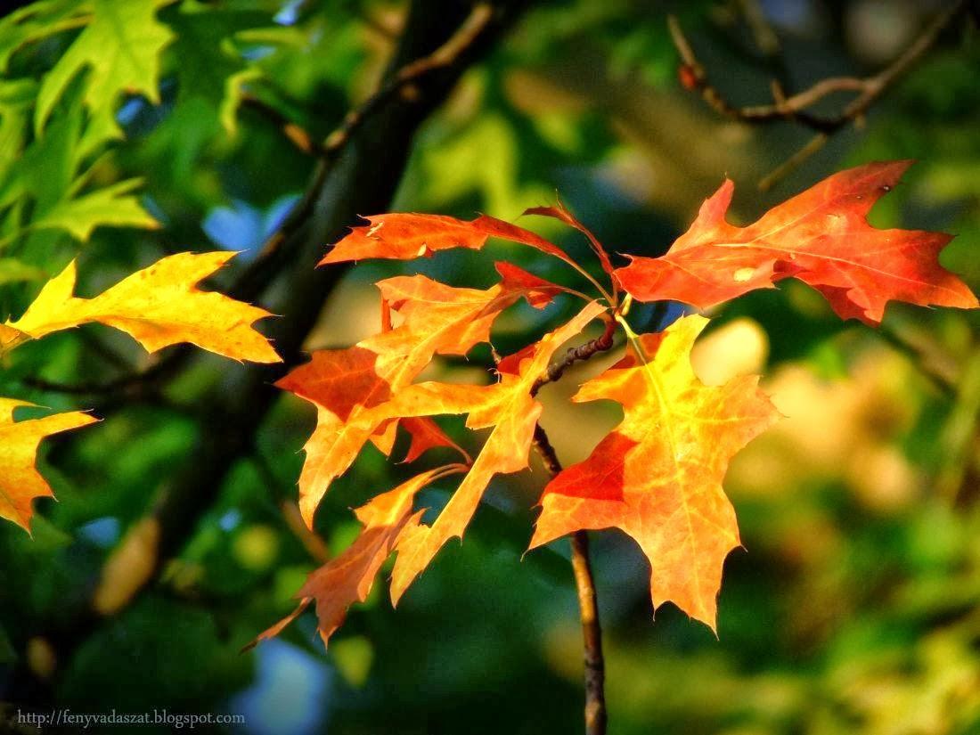 Őszi délutáni csavargás