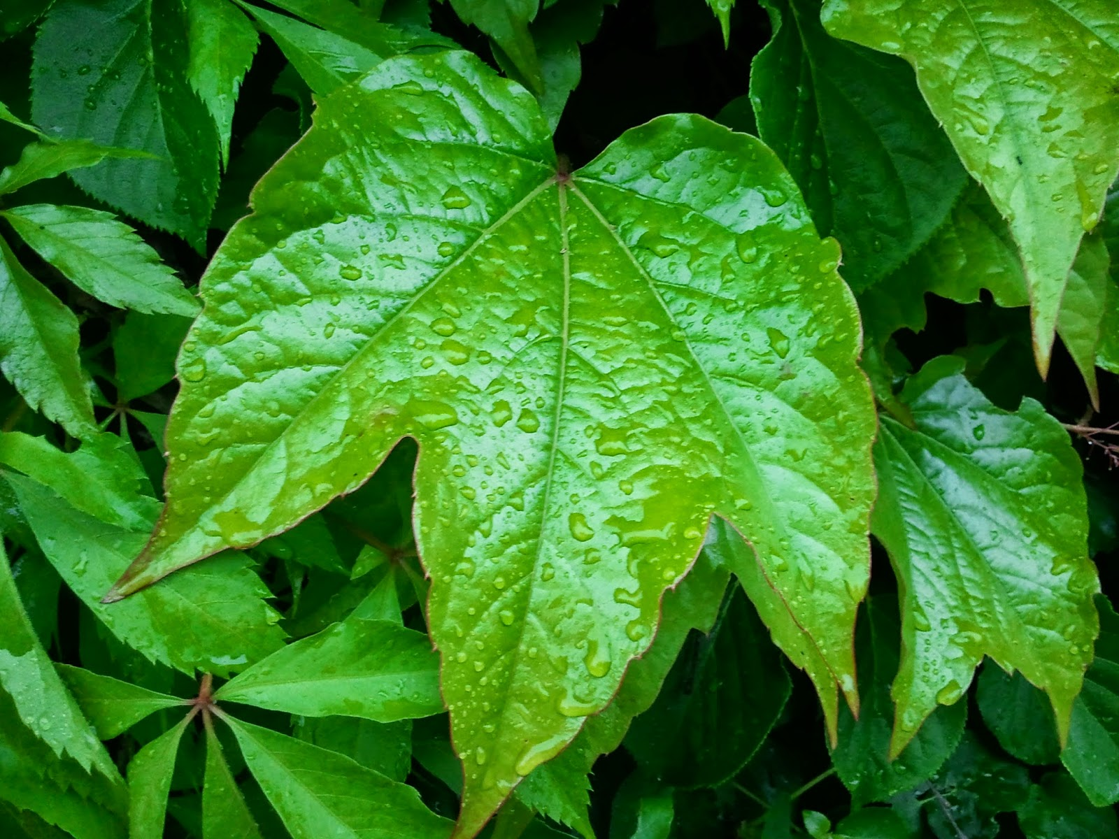 texture, foliage, foliage texture